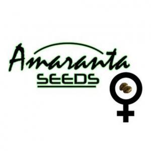 Amaranta Seeds